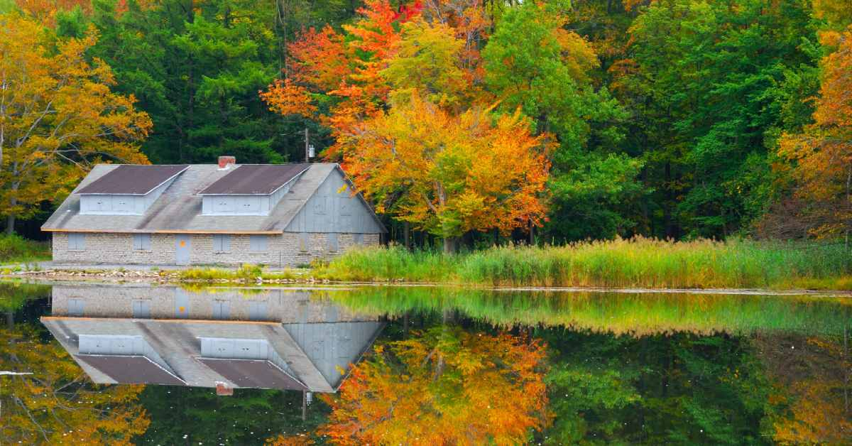 pond in reinstein woods, surrounded by fall foliage