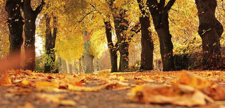 Yellow and orange leaves on a tree lined path